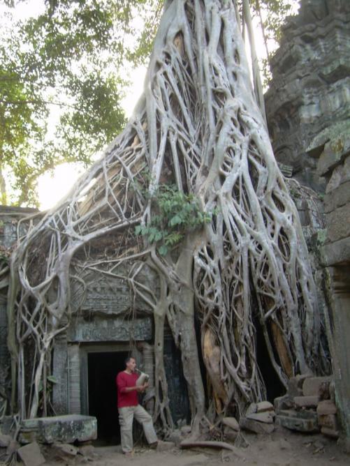 Banian tree, Angkor Cambodge 2008
