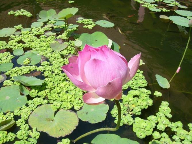 28. Lotus - Asie 2008