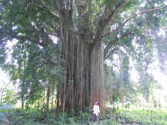 A la recherche de racines - 2014